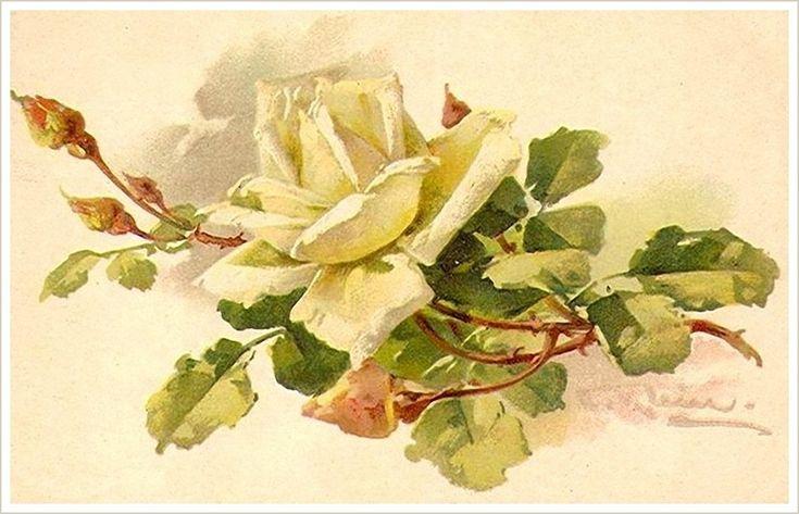 Розы ретро открытка