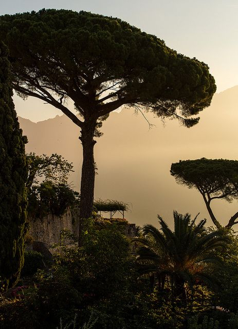 12 Best Images About Drzewa On Pinterest Trees Rome