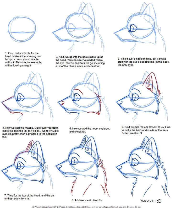 How to Draw: Canine Profile Tutorial by JustAutumn on DeviantArt