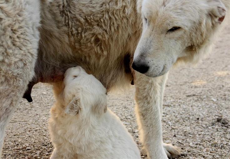maternal instinct...