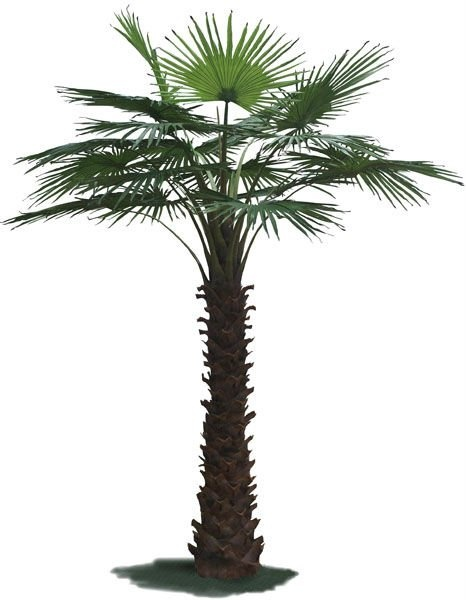 artificial indoor palm tree buy big indoor palm tree artificial dec. Black Bedroom Furniture Sets. Home Design Ideas