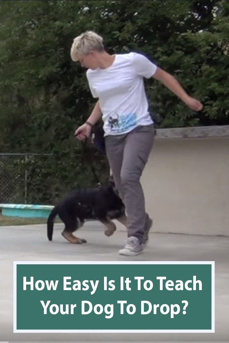 Teach Your Dog To Drop This Is The First Step For Many Training