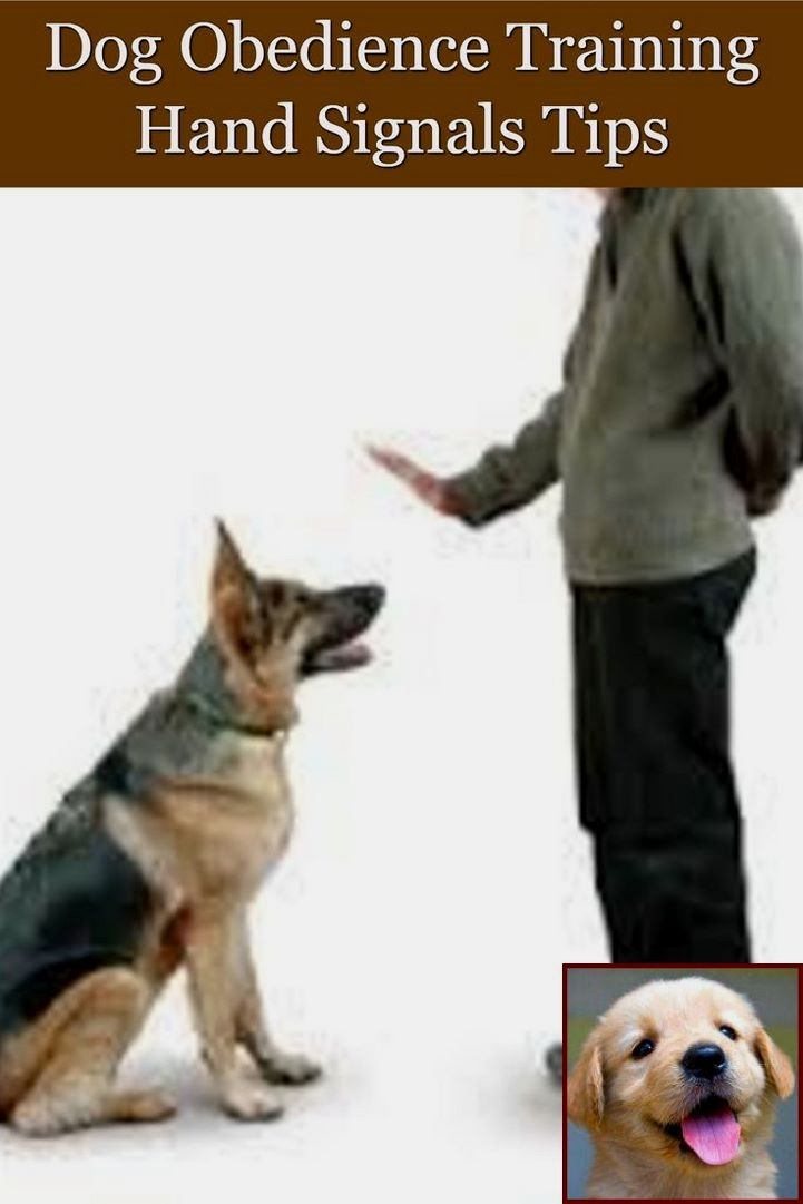 1 Have Dog Behavior Problems Learn About House Training A Boxer