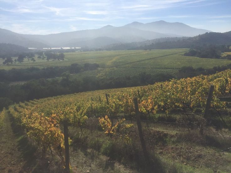 Matetic--the ultimate family-friendly winery