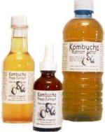 Analysis  of the Kombucha Ferment