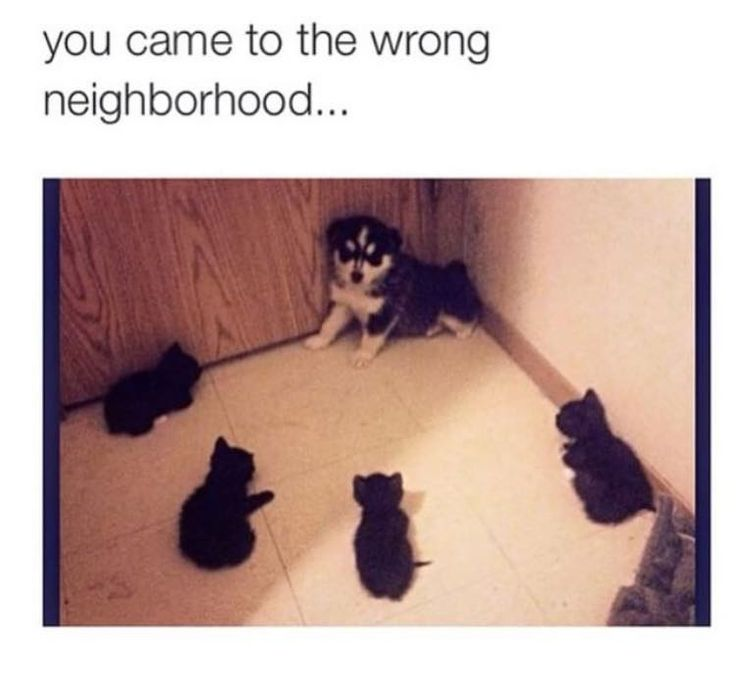 I see ThunderClan, RiverClan, WindClan, and ShadowClan are working together.
