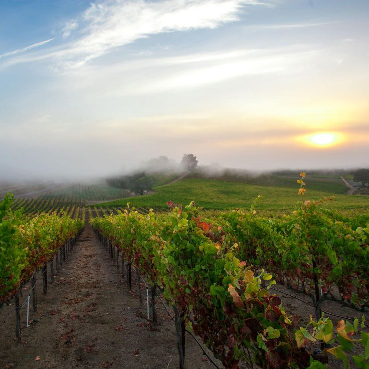 3 Top-Notch Road Trips You Can Do Now in Sonoma County | Although Sonoma County is still recovering from wildfires, don't be discouraged from visiting. There are plenty of tasting rooms, eateries, and the like that are very much open for business