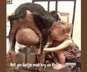 so `n biki melk vir die koffie...