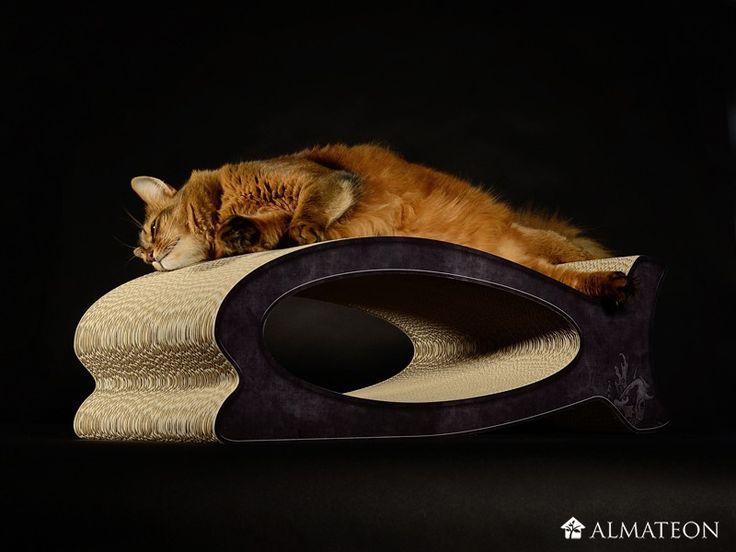 Les 20 meilleures images du tableau nos amis les chats sur for Carpe koi charente maritime