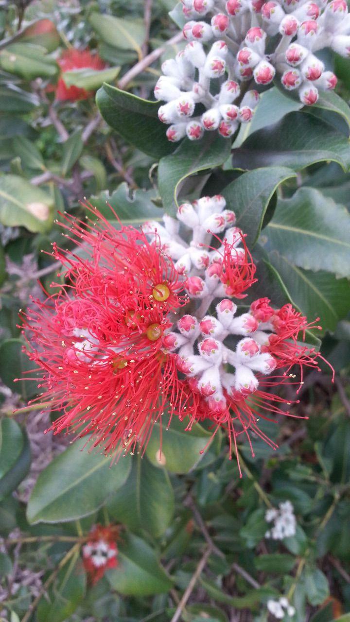 Our beautiful wildflowers in Perth Western Australia taken 27.08 2015 R.C.