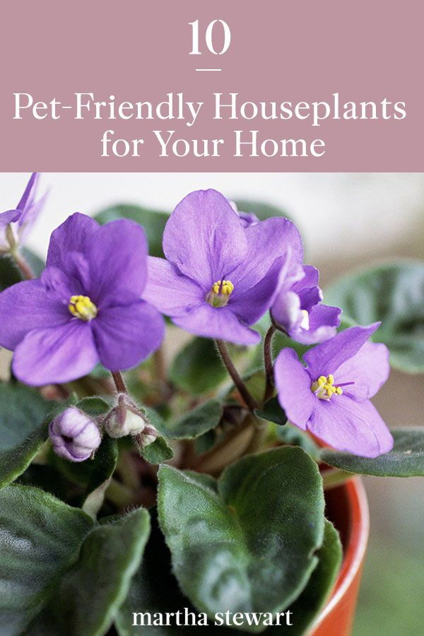 10 Pet Friendly Houseplants For Your Home In 2020 House Plants Houseplants Pet Friendly