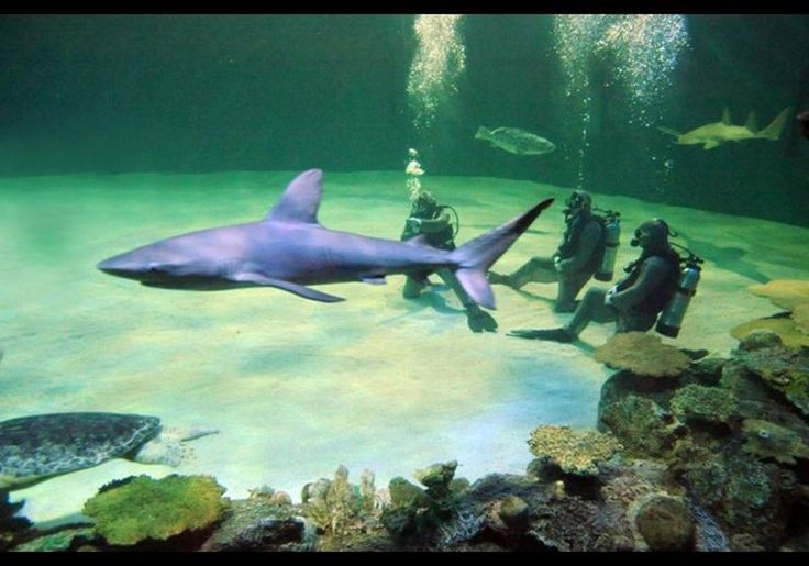 """Shark Reef, located in Mandalay Bay, is a full-sized aquarium, billing itself as """"North America's only predator-based aquarium."""" It features lots of killers, including rare golden crocodiles, moray eels, jellyfish and piranhas, and 15 species of sharks. Y"""