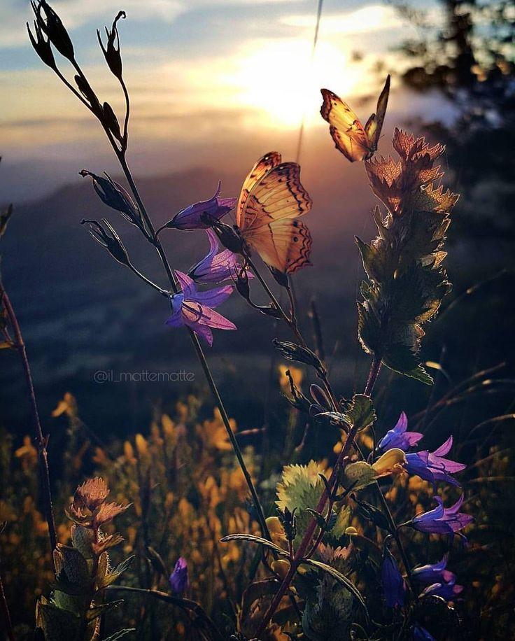 Butterfly Field- Artist : @il_mattematte