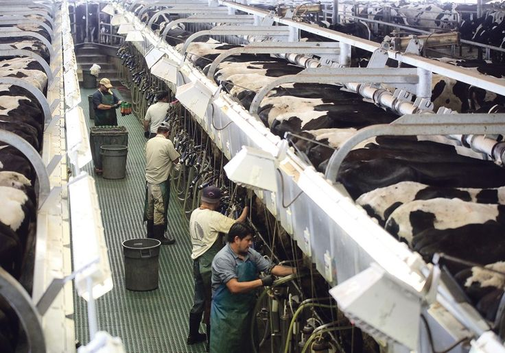 American dairy farmers continue to benefit from broad agriculture supports, a study shows. Dairy Farmers of Canada has had Grey, Clark, Shih and Associates regularly study the effects of American policy on dairy farms in the United States. The latest data were released at the recent Dairy Farmers of Canada Policy