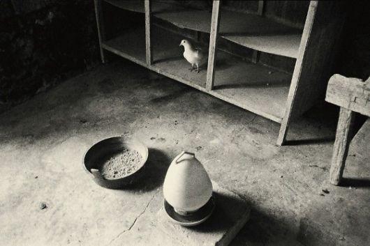 Jing HUANG - Un pigeon qui ne supporte pas de se nourrir Pure of sight, 2009