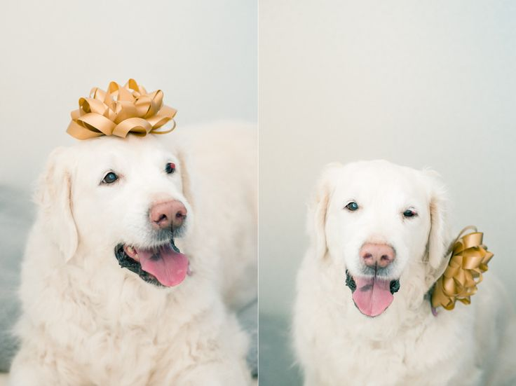 My beautiful Golden, Diva. Best dog in the world.
