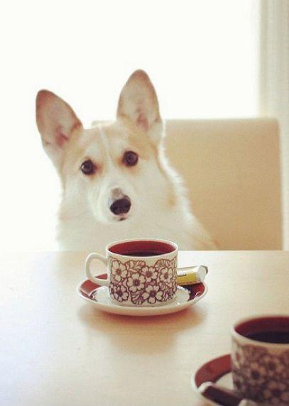 Corgi Coffee Date
