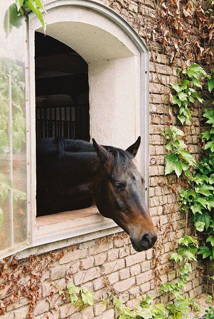 226 besten rural england bilder auf pinterest landleben bauerh fe und englische landh user. Black Bedroom Furniture Sets. Home Design Ideas