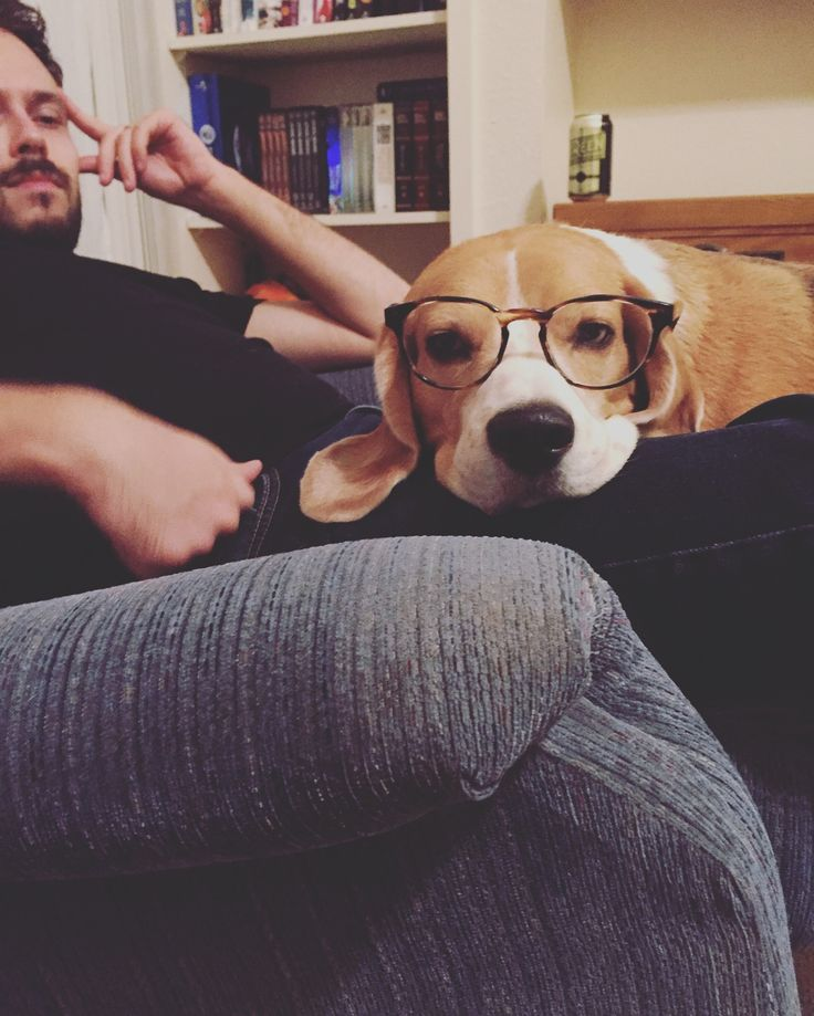 Alvy the beagle that loves reading periodicals : beagle