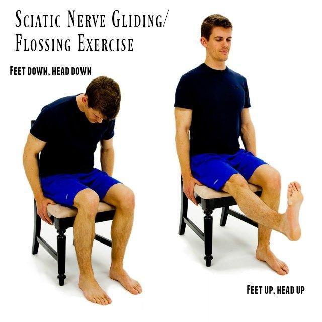25+ Best Ideas about Sciatic Nerve on Pinterest | Siatic ...