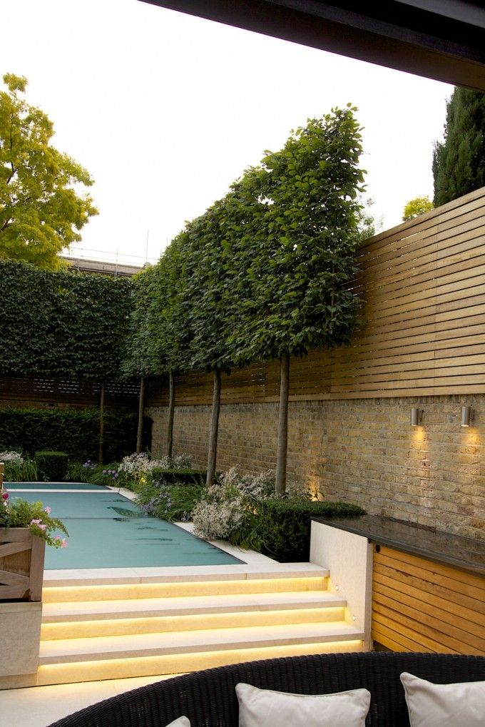 Holland Park - pleached Hornbeam hedge