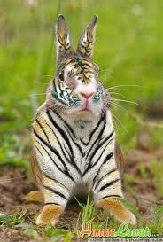 Clemson Tiger Bunny