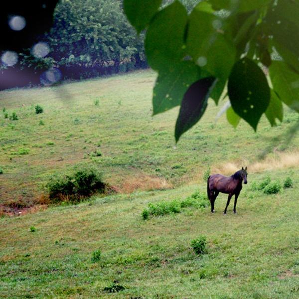 beitemark hest