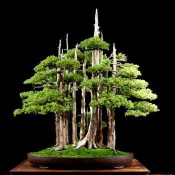 #TomaRecortes.El Ministerio de Economía, adquiere una colección de bonsáis para el Real Jardín Botánico por valor de 200.000 €