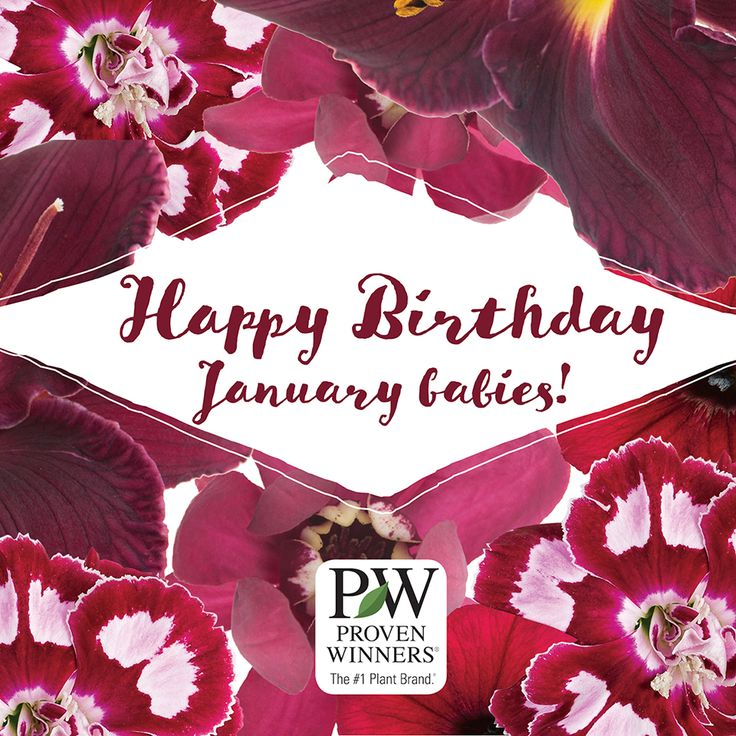 Happy Birthday To Walkonby Jan 30: 19 Best Birth Month Flowers Images On Pinterest