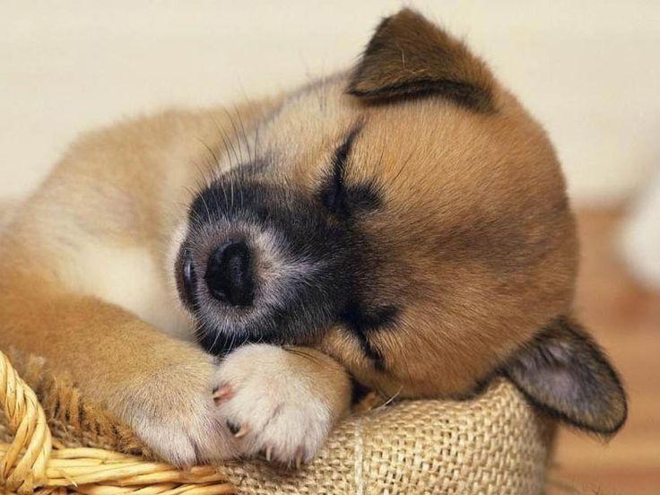 fotos-cachorrinhos-caes.jpg (850×638)