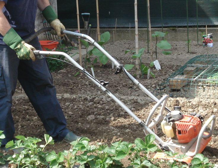 L'orto prende forma - Seminala, coltiva la tua passione per la terra.