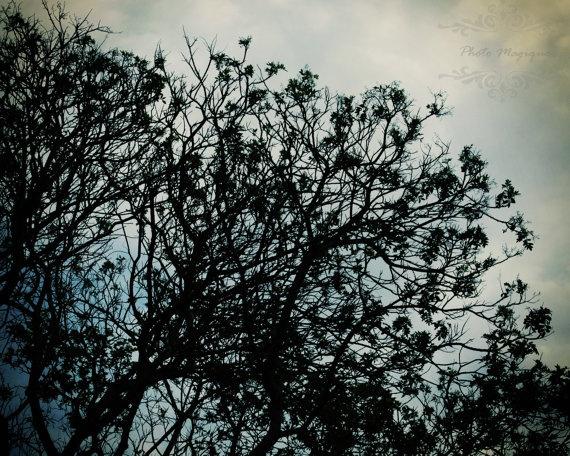 Blue Shadowhunter Tree Silhouette Grey Sky 8x10 by PhotoMagique, $4.00 #CityofBones #MortalInstruments