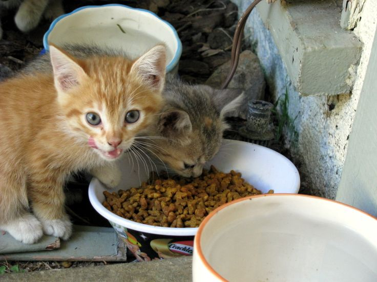 Table Food To Feed Stray Cat