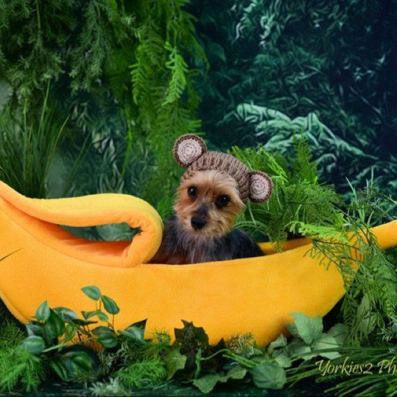 Small Banana Dog Gift Cat Bed Dog Nest Bed Chihuahua Yorkie Etsy Novelty Dog Beds Cat Bed Dog Gifts