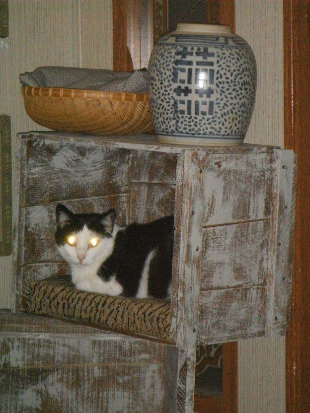 Mein Mann hat ein paar alte Holzkisten gefunden, die an der Seite …   – Cat