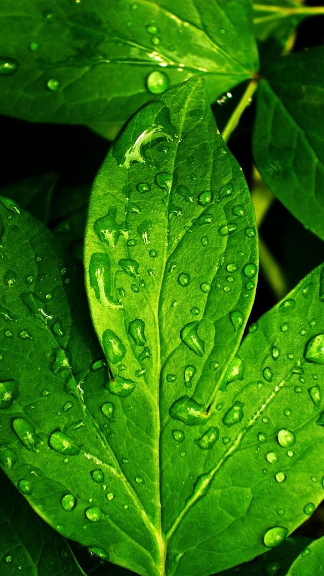 39 best leaves wallpaper iphone images on Pinterest  Leaves wallpaper, Iphone 6 wallpaper and