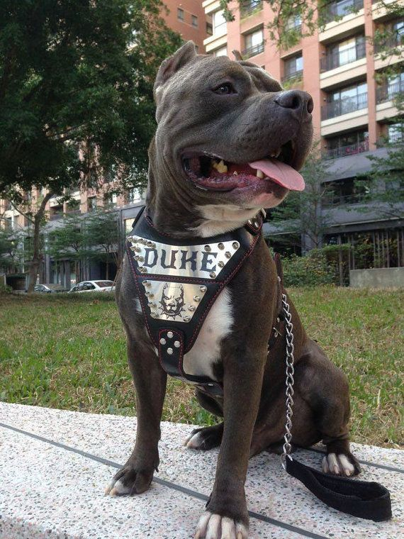 Bestia Metal Personalized Leather Dog Harness Engraved On