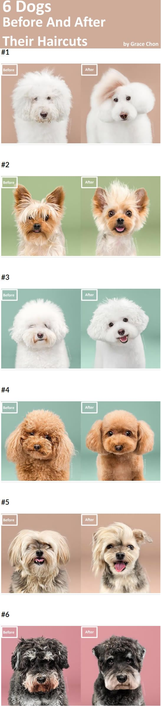 Animal photographer Grace Chon recently shot a photo series titled HAIRY.It's about extreme transformation (I mean, from hairy to cute) of several dogs before and after their haircuts. Most of them are groomed as Japanese style. Check Grace Chon's website to get more cute photos of dog haircuts.