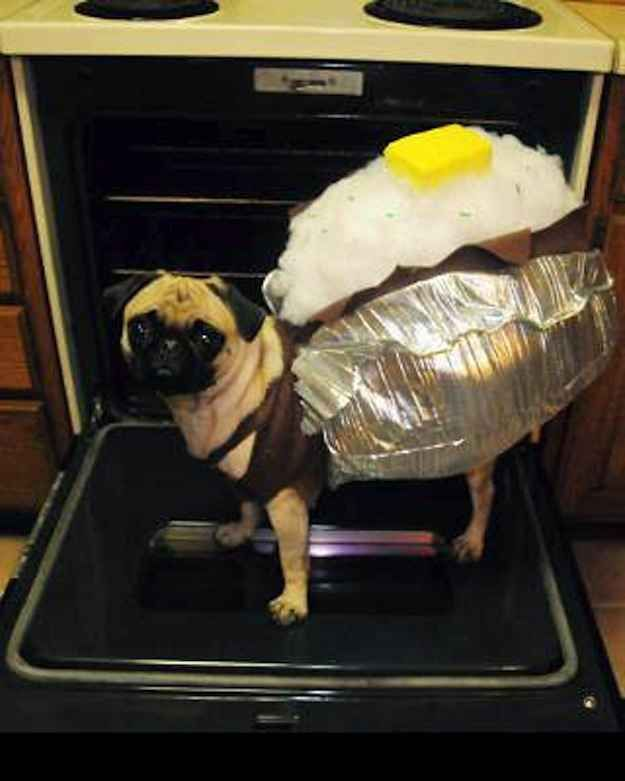 26 Costumes That Prove Pugs Always Win At Halloween - BuzzFeed Mobile