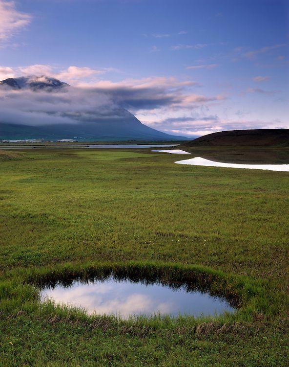 Wetlands along Eyjafjördur near Dalvik Iceland, Europe