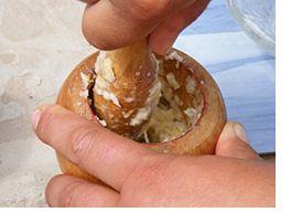 Βιολογικό εντομοκτόνο με σκόρδο και κρεμμύδι