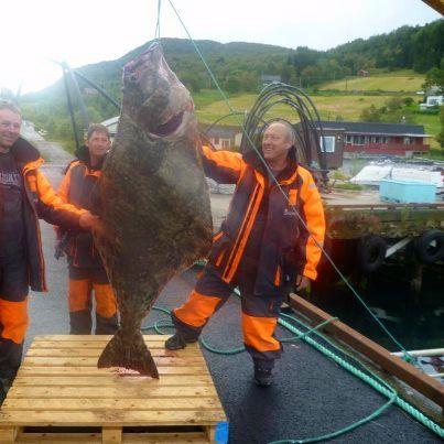 recordfish