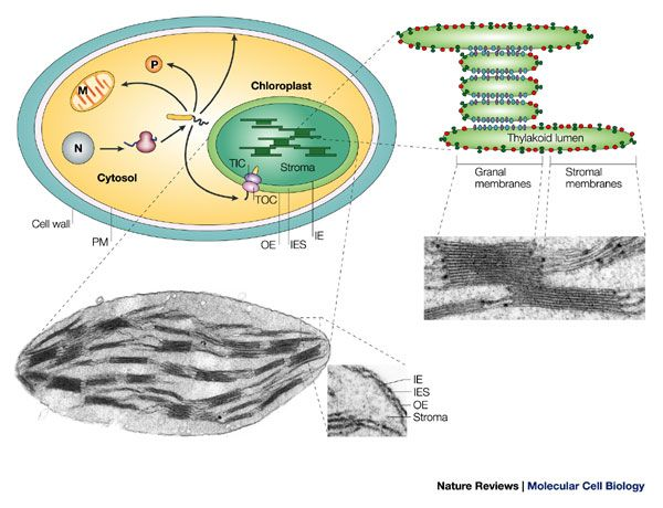 9 best cell structure and function images on Pinterest
