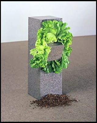 ANSELMO Giovanni (né en 1934), Sans titre (Structure qui se mange), 1968, deux blocs de granit, fil de cuivre et laitue fraîche, 70x13x137 cm, Paris, MNAM.