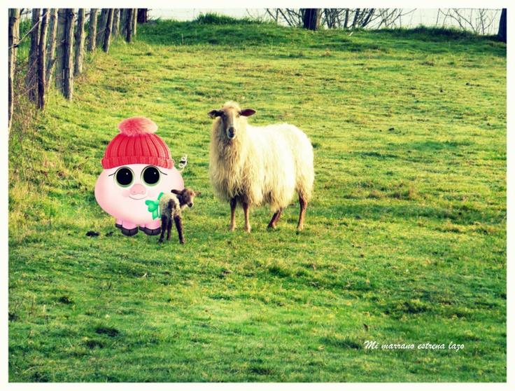 Mmel se va a ver a sus amigas las ovejas