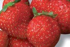FRAISE MARA DES BOIS - Gustativement, c'est une excellente variété. Elle dégage de délicieux arômes de fraise des bois. Elle est sucrée et fruitée. Son fruit est ferme à chair tendre.
