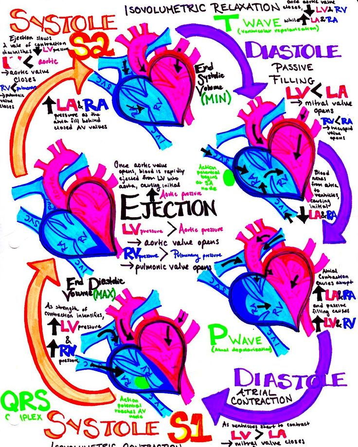 "504 Likes, 4 Comments - Dr. Katy Hanson (@hansonsanatomy) on Instagram: ""#Cardiac cycle revisited!!! If you haven't made your own drawing of this yet, I highly, highly…"""