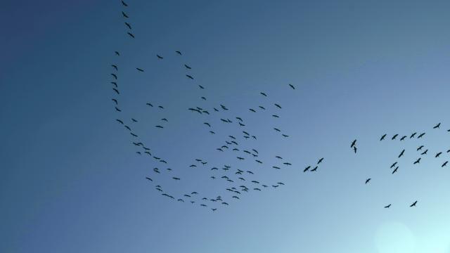395 vogels vliegen tegen wolkenkrabber aan | NU - Het laatste nieuws het eerst op NU.nl