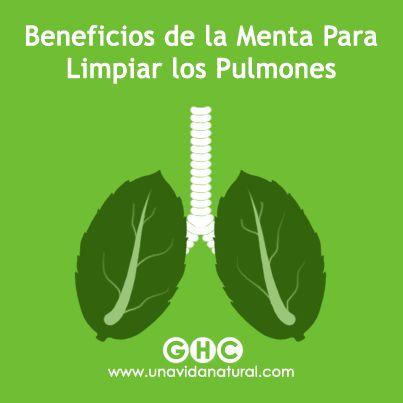 Las propiedades relajantes y de alivio que posee la menta la han colocado a la vanguardia de las hierbas que son beneficiosas para tratar trastornos respiratorios como los resfriados, la tos, la irritación de la garganta y el enrojecimiento de los senos nasales.