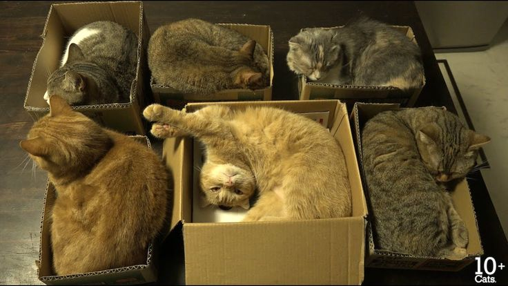 Cats love sleeping in cardboard boxes cat love cats